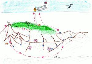 Pianosa Boa SP2001 sito